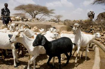 Animal Health To Boost Farmers Income